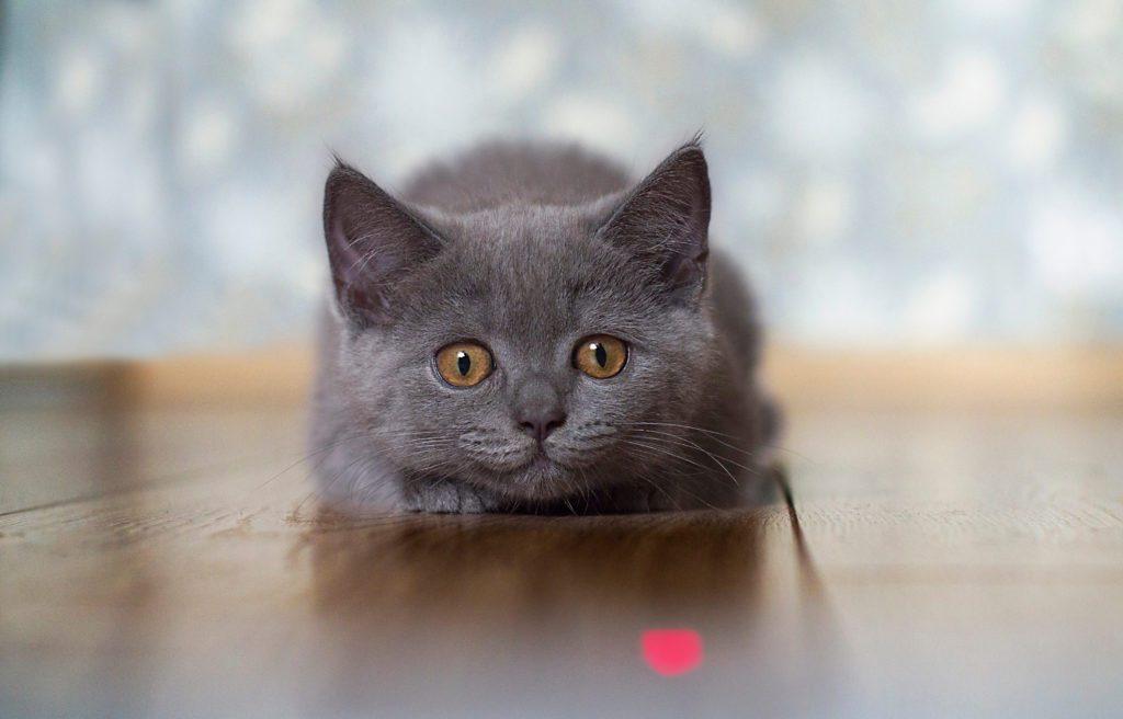 Un buon titolo per il blog post attira l'attenzione del lettore come un gatto curioso