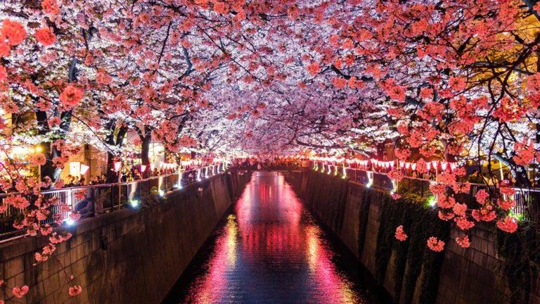 Viaggiare in Giappone con Watabi